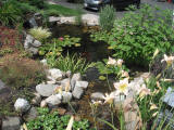 water feature transformations
